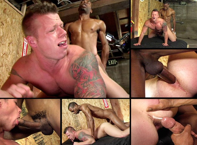 Obey DVD - Gallery - 002